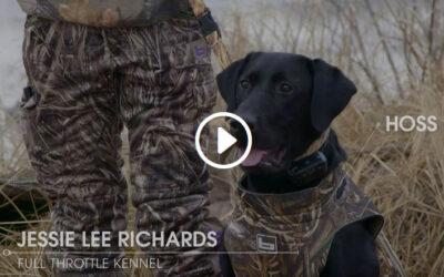 Gun Dog Training: Steadiness Drill